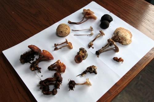 Des champignons visibles, et peut-être des invisibles aussi, qui sait ?
