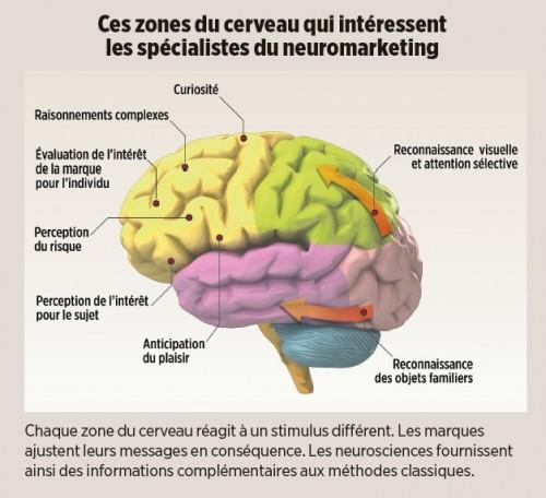 zones du cerveau